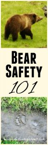 Bear safety tips written by a former park ranger! || Dirt In My Shoes