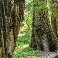 Muir Woods Trail || Muir Woods National Monument || Dirt In My Shoes