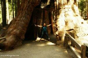 Mariposa Grove || Yosemite National Park || Dirt In My Shoes
