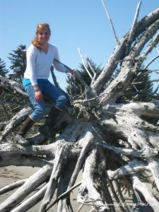 Driftwood || Glacier Bay National Park || Dirt In My Shoes