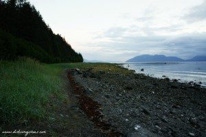 Intertidal Beach Zone || Glacier Bay National Park || Dirt In My Shoes
