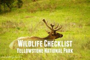 Yellowstone Wildlife Checklist || Dirt In My Shoes