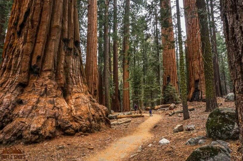 10 Things You Can't Miss On Your First Visit to Sequoia and Kings Canyon