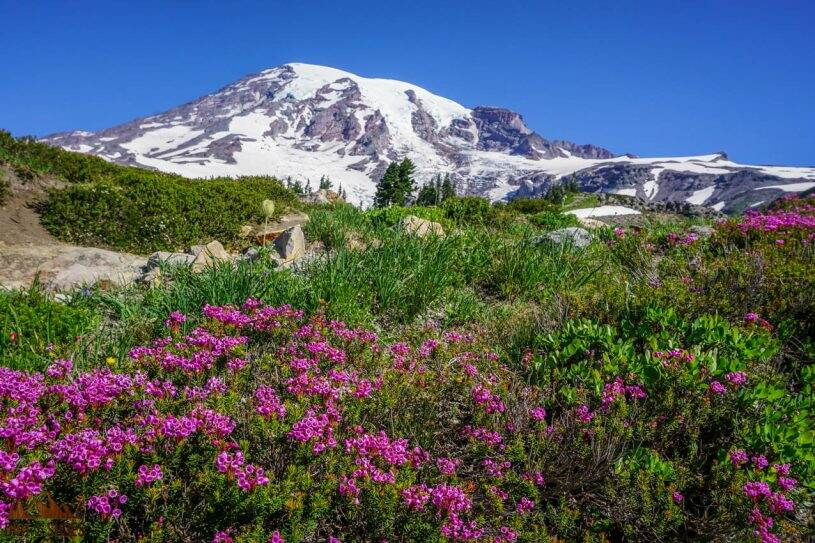 10 Things You Can't Miss On Your First Visit to Mount Rainier