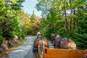 Carriage Ride || Acadia National Park || Dirt In My Shoes